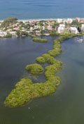 Aerial view of mangrove islands in Little Sarasota Bay.