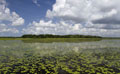 Myakka River State Park; Water lilies visible on lake and Oak Palm Hammock visible at the center back.